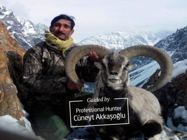 Blue sheep hunting in Pakistan